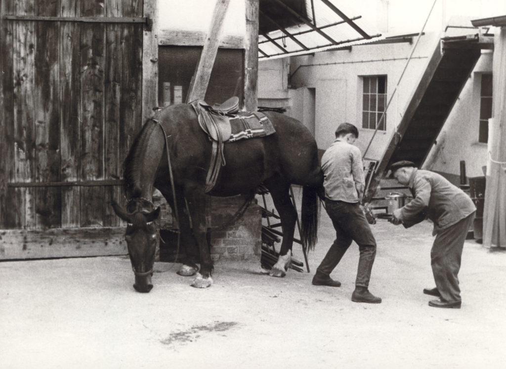 Hauptstraße 3 – Schmied Heck – Pferd beschlagen um 1965