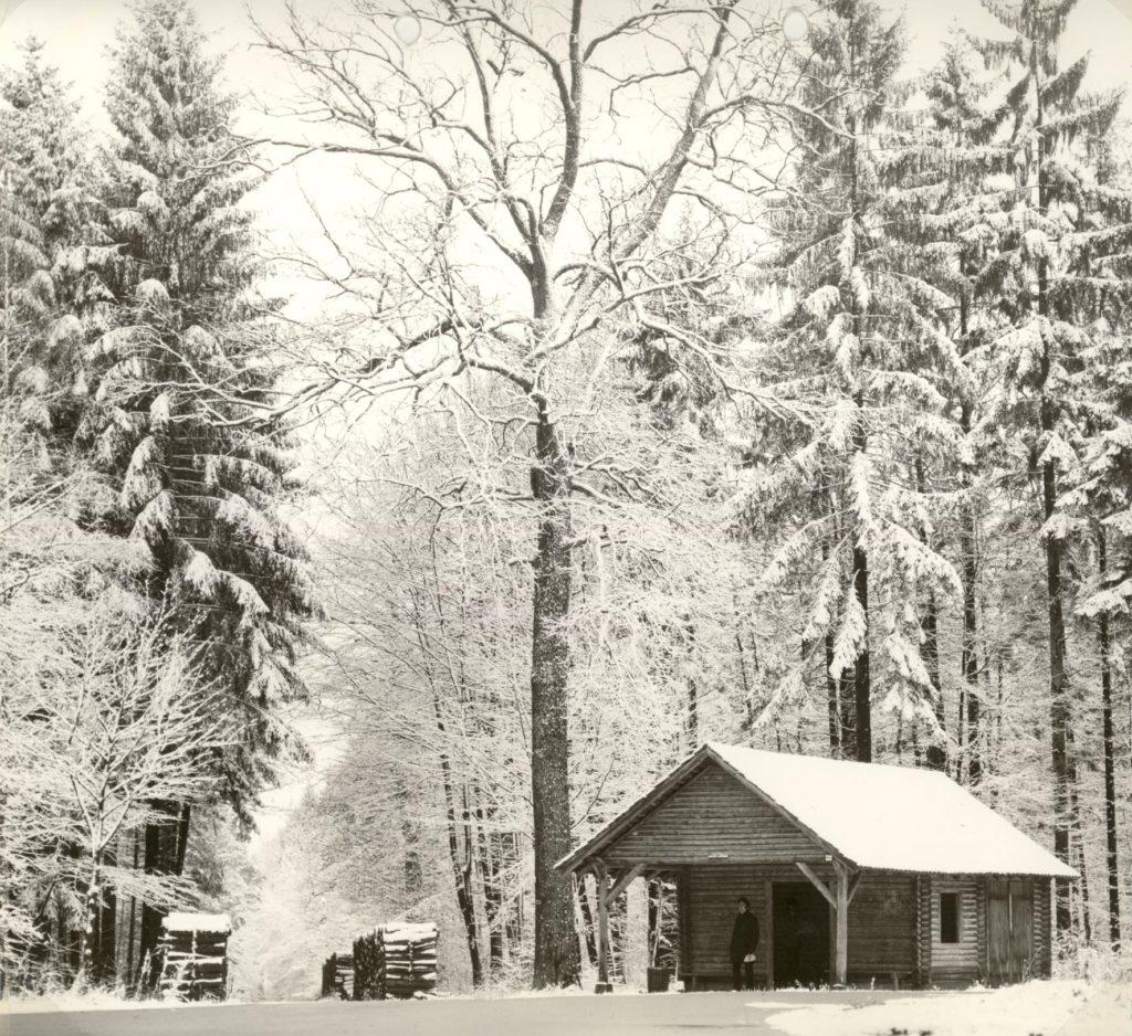 Gerlinger Wald – Blockhaus am Großen Stern
